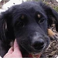 Adopt A Pet :: Kiley - Beachwood, OH