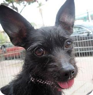 Terrier (Unknown Type, Medium) Mix Dog for adoption in El Cajon, California - Mindy