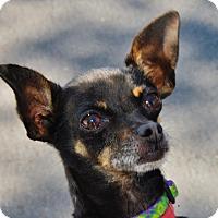Adopt A Pet :: Squeak - San Jose, CA
