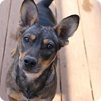 Adopt A Pet :: Salina - Parker Ford, PA