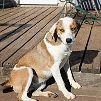 Shepherd (Unknown Type) Mix Dog for adoption in Clifton, Texas - Lucy Lu