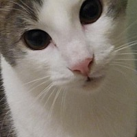 Adopt A Pet :: Duncan - Valrico, FL