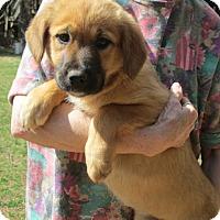 Adopt A Pet :: JUBAL - Williston Park, NY