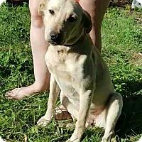 Adopt A Pet :: Elsie - Chiefland, FL