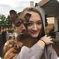 Adopt A Pet :: Molly - Los Angeles, CA