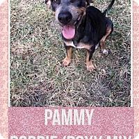 Adopt A Pet :: PAMMY - Mesa, AZ