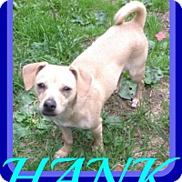 Adopt A Pet :: HANK - Sebec, ME