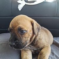 Adopt A Pet :: SEAN - Oakbank, MB
