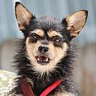 Adopt A Pet :: Gizzy B