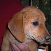 Adopt A Pet :: Eclipse - Fairfax Station, VA