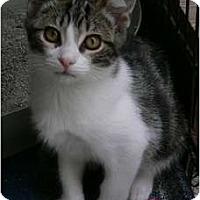 Adopt A Pet :: Luke - lake elsinore, CA