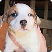 Adopt A Pet :: Tina Louise - Westbrook, CT