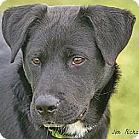 Adopt A Pet :: Teagan - PENDING, in Maine - kennebunkport, ME