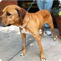 Adopt A Pet :: Sam - Okatie, SC