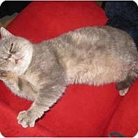 Adopt A Pet :: Bea Arthur aka Mindy - Beverly Hills, CA