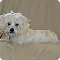 Adopt A Pet :: Wrigley - Cotati, CA
