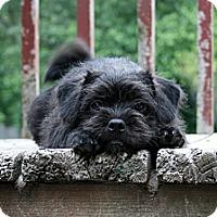 Adopt A Pet :: Brandy - Holland, MI