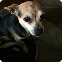 Adopt A Pet :: Pj - Santa Ana, CA