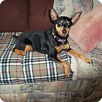 Adopt A Pet :: Madison aka Maddy - Nashville, TN