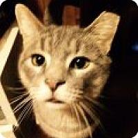 Adopt A Pet :: Virgil - Delmont, PA