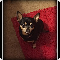 Adopt A Pet :: Sweet Pea - Indian Trail, NC