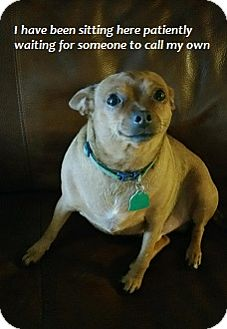 Chihuahua Mix Dog for adoption in Tomball, Texas - Charlie