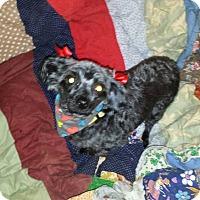 Adopt A Pet :: Sasha - Fayette City, PA