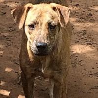 Adopt A Pet :: Tommy - Blanchard, OK