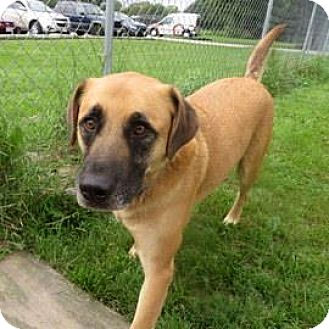 Shepherd (Unknown Type) Mix Dog for adoption in Janesville, Wisconsin - Quincey