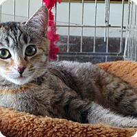 Adopt A Pet :: Willow - Sherman Oaks, CA