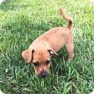 Adopt A Pet :: Chip RBF