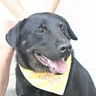 Adopt A Pet :: Indy