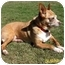 Photo 1 - Chihuahua Dog for adoption in Vista, California - Sugar Plum