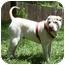 Photo 1 - Shar Pei Dog for adoption in Houston, Texas - Buster