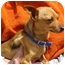 Photo 3 - Chihuahua Mix Dog for adoption in Spring Valley, California - Rusty