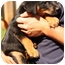 Photo 2 - Rottweiler/Australian Shepherd Mix Puppy for adoption in Prince William County, Virginia - riley