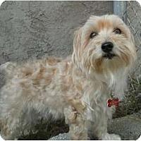 Adopt A Pet :: FL Chloe - Ocala, FL