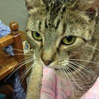 Adopt A Pet :: Bear - Fresno, CA