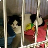 Adopt A Pet :: Swiss - Byron Center, MI