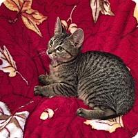 Adopt A Pet :: Glory - Colmar, PA