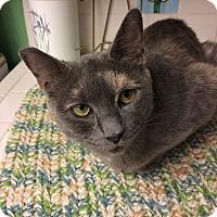 Adopt A Pet :: Pebbles - Roseburg, OR
