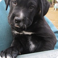 Adopt A Pet :: AGNES - Lincolndale, NY