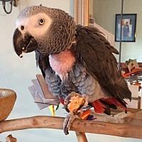 Adopt A Pet :: Louie - Stratford, CT