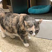 Adopt A Pet :: Sabrina - Colmar, PA