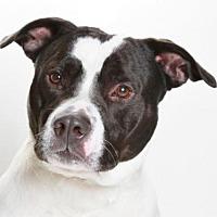 Adopt A Pet :: *ESTEBAN - Burbank, CA
