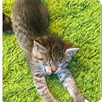 Adopt A Pet :: Pancake K4 Aka Waffle - Sherwood, OR