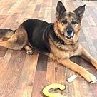 Adopt A Pet :: Belle 5358