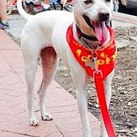 Adopt A Pet :: Crystal - Washington, DC
