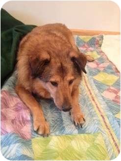 Sheltie, Shetland Sheepdog Mix Dog for adoption in Long Beach, New York - Jenny