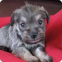 Adopt A Pet :: Journey - North Benton, OH